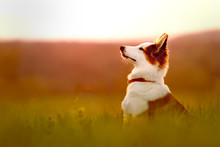 Portrait Von Einem Jungen Hund...