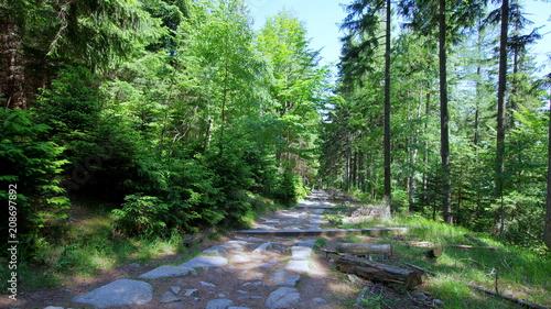 Tuinposter Weg in bos Leśnym szlakiem przez Karkonosze, kamienna ścieżka w polskich górach, Sudetach