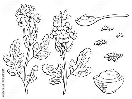 Stampa su Tela Mustard plant graphic black white isolated sketch set illustration vector