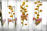 Test tubes with flowers in rack on white background, closeup