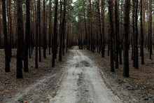 Pine Forest Rural Road