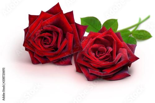 Staande foto Roses Blumen 937