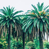 tropical palm trees. minimal style. summer nature - 208720892