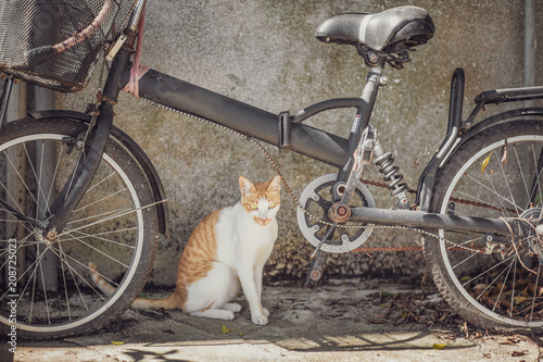 Stray Cat in town Poster