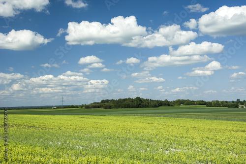 Deurstickers Weide, Moeras Yellow field and forest grove
