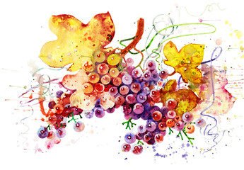 bunch of grapes_008
