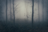 mysterious forest landscape with trees in fog - 208729888
