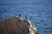 Two Black Cormorants Sitting On A Rock In The Sea