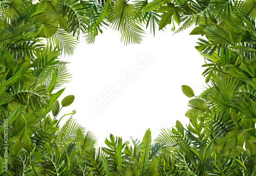 Summer tropical leaves for banner and background, different kind of leaf, rainforest plant. copy space and blank text.
