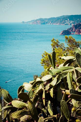 In de dag Canarische Eilanden Costa brava