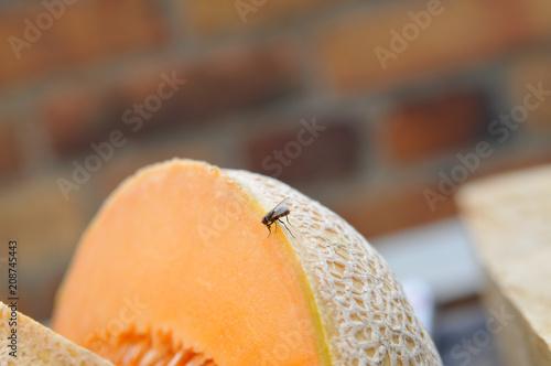 fliege auf melone