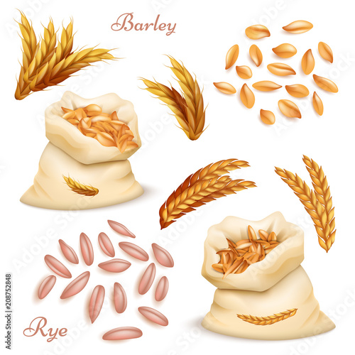 Leinwand Poster Agricultural cereals - barley and rye vector set
