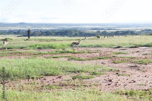 Fotobehang Olijf Masai Mara Kenya