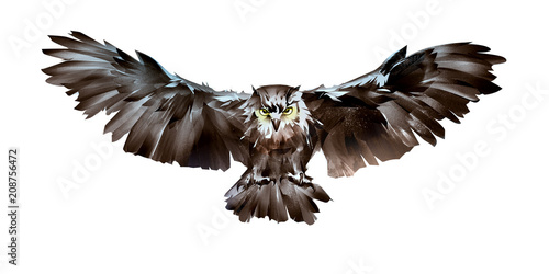 Foto op Aluminium Uilen cartoon painted flying bird owl front on white