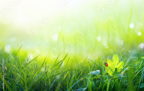Cadres-photo bureau Vert chaux Fresh juicy young grass in nature in the rays of sunlight with a beautiful sparkling bokeh and ladybug on a green leaf macro. Summer spring background, copy space.