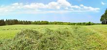 Heu Auf Dem Feld - Panorama
