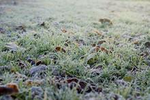 Autumn Frozen Green Grass. Win...