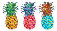 Pineapple Vector Illustration Set. Exotic Tropical Fruit. Hand Drawn. Pop Art.