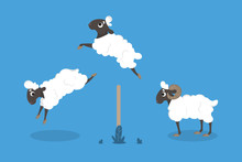 Isolated Jumping Sheep.