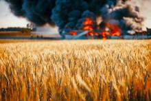 Huge Fire Among Gold Wheat Fields