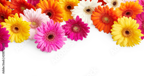 Door stickers Gerbera Gerbera flowers isolated on white background
