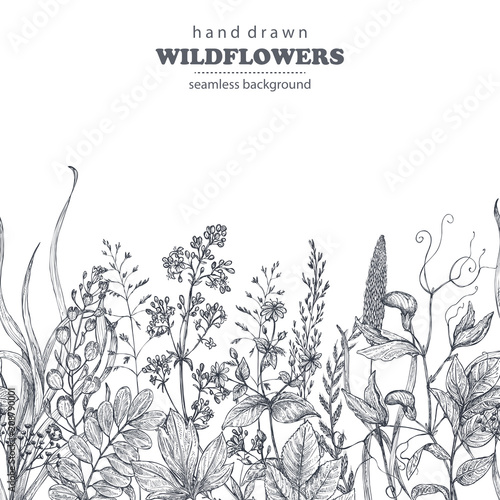 Foto  Vector seamless pattern with hand drawn herbs and wildflowers