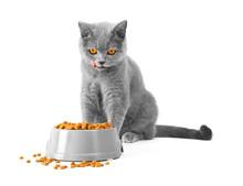 A Cat Eats Food And Lickens