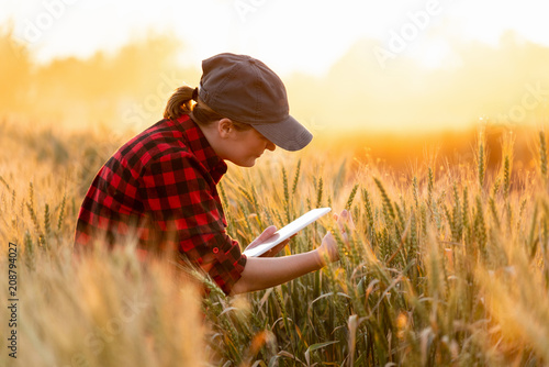 Fotografía  A woman farmer examines the field of cereals and sends data to the cloud from the tablet