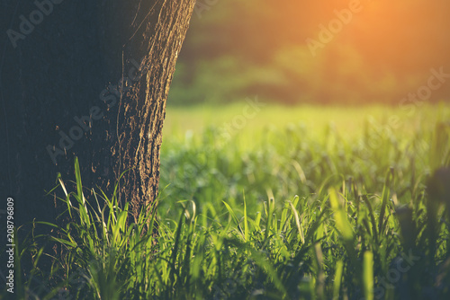 Spoed Foto op Canvas Natuur Closeup nature view of green leaf in garden at summer under sunlight. Natural green plants landscape using as a background or wallpaper.