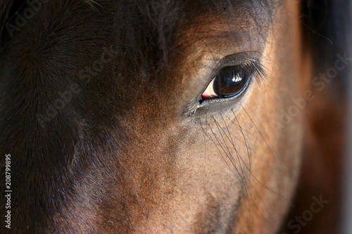 Canvas Prints Horses Eye of a horse close-up.