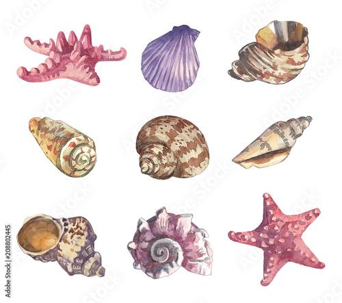 Watercolor sea shell set