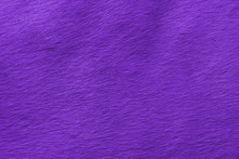 Abstract View Of The Horse's Wool Toned In The Color Of The Year Pantone Ultra Violet.  Background.