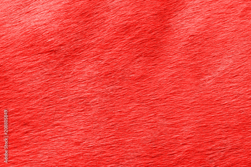 Fotografia, Obraz  abstract view of the horse's wool toned in the color of the year Pantone grenadine