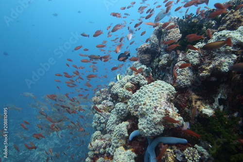 Colorful reef fish blue ocean and bright coral underwater