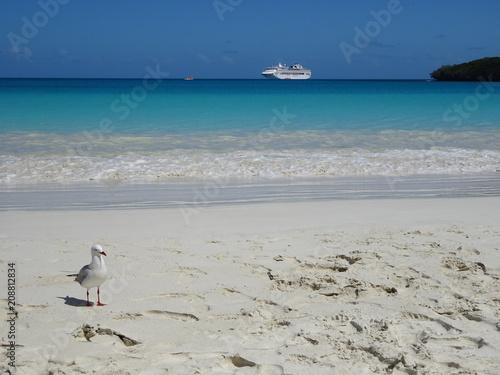 Poster Oceanië Bird on white beach in New Caledonia - Baie de Kuto