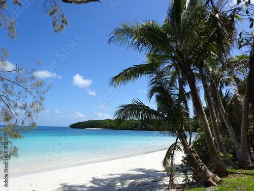 Poster Oceanië Palm trees on Isle of Pines - Baie de Kuto - New Caledonia