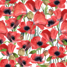 Seamless Pattern Of Red Poppy Flowers, Leaves And Poppy Head Isolated On White Background