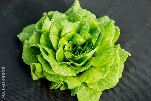 Obraz green lettuce - fototapety do salonu