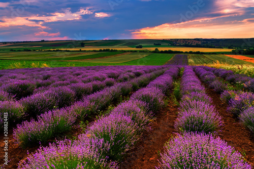 Fotobehang Platteland Lavender field at sunset