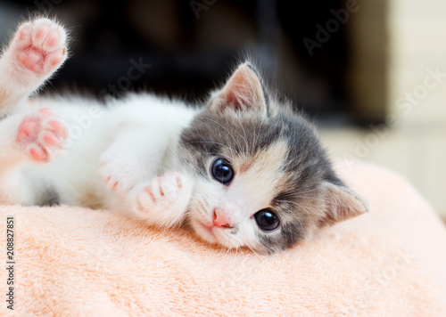 Fotomural small kitten conveniently lies and looks at the camera