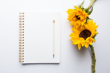 Sunflower Stock Desktop Mockups