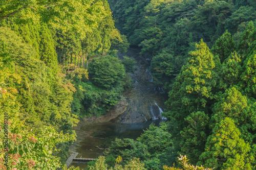 Poster Road in forest 夏の養老渓谷の粟又の滝の風景