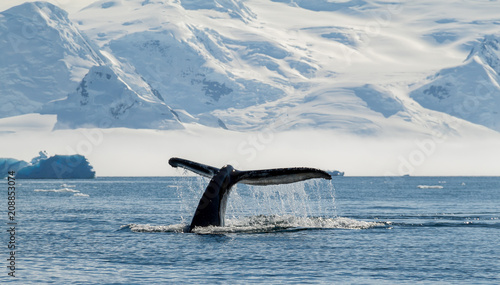 Photo Stands Antarctica Humpback whale, Antarctica