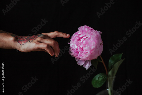 Hand on peony on a black background