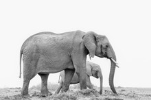 Female Elephant With Her Baby ...