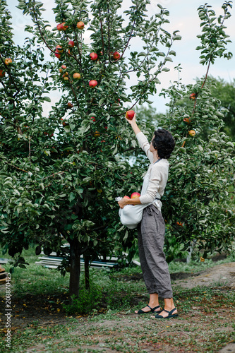 In de dag Tuin Woman picking apples in garden