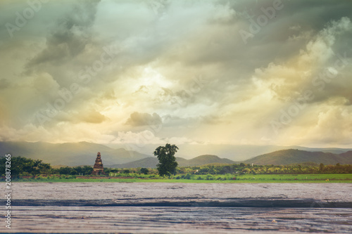 Foto op Canvas Olijf wooden board and rice field at sunset background