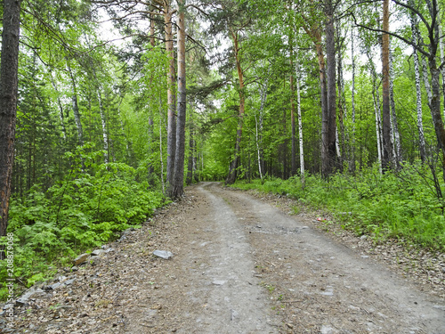 Photo Stands Road in forest Summer Landscape: Forest Road