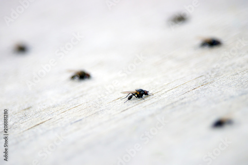 Fotobehang Macrofotografie many flies on the table