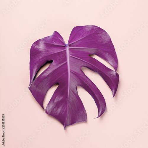 monstera leaf on pink background